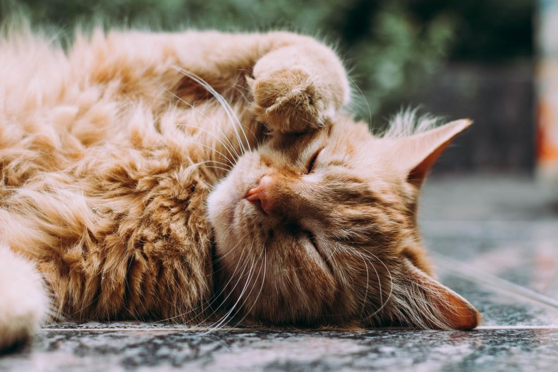 Những người yêu mèo, đây là cách một người bạn mèo có thể tăng cường sức khỏe của bạn